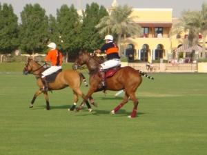 Polo - horses